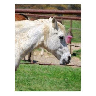 Carte Postale illustration de crayon de cheval blanc