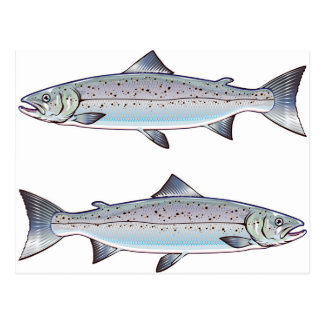 Carte Postale Illustration de poissons d'océan de saumon
