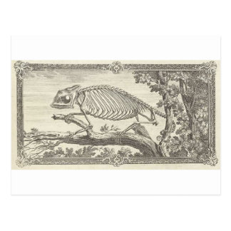 Carte Postale Illustration de squelette de caméléon