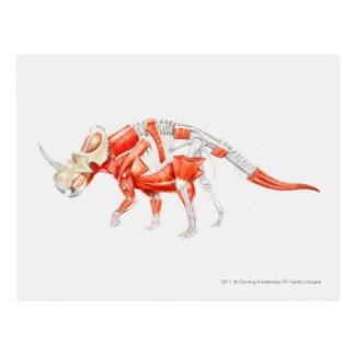 Carte Postale Illustration de système musculaire de Triceratops