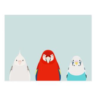 Carte Postale Illustration de trois oiseaux - tores aucun iro