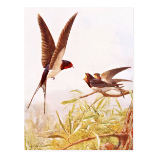 Carte Postale Illustration d'oiseau d'hirondelle