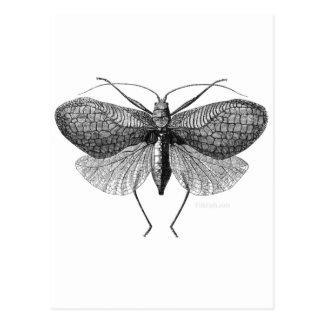 Carte Postale illustration scientifique de mite