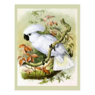 Carte Postale Illustration Soufre-Crêtée de cru de cacatoès