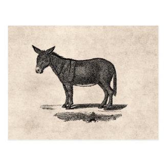 Carte Postale Illustration vintage d'âne - ânes 1800's