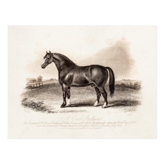 Carte Postale Illustration vintage de cheval d'étalon de chariot