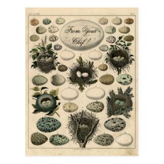 Carte Postale Illustration vintage de magot d'oiseaux - signalez