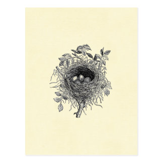 Carte Postale Illustration vintage de nid d'oiseau