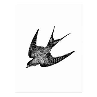 Carte Postale Illustration vintage d'hirondelle - oiseau 1800's