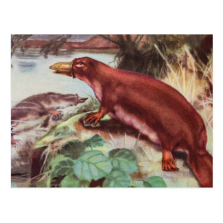 Carte Postale Illustration vintage d'ornithorynque, dessin