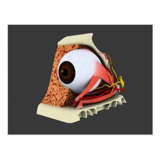 Carte Postale Image conceptuelle de l'anatomie 1 d'oeil humain