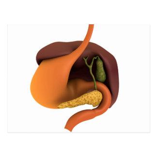 Carte Postale Image conceptuelle de l'appareil digestif humain 4