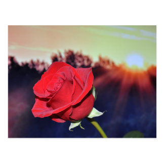 Carte Postale Image de fleur de rose rouge