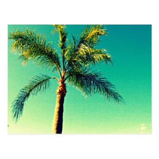 Carte Postale Image ensoleillée de ciel de palmier de la Floride