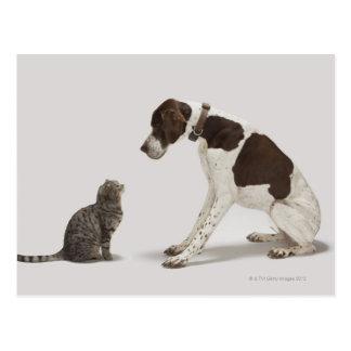 Carte Postale Indicateur regardant vers le bas le chat