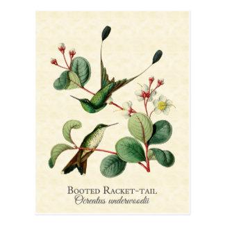 Carte postale initialisée d'art de colibris de