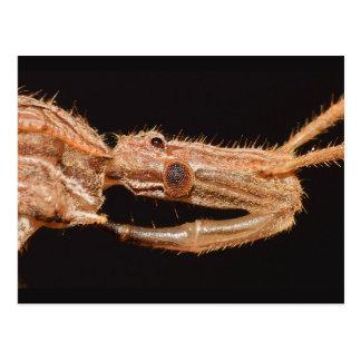 Carte Postale Insecte vrai du Missouri