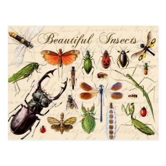 Carte Postale Insectes - les organismes les plus divers de la