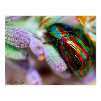 Carte Postale insectes nature