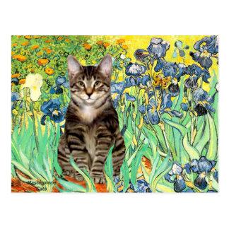 Carte Postale Iris - chat de tigre tigré 30
