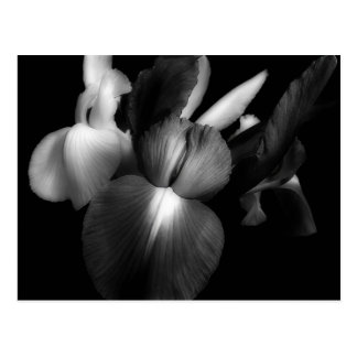 Carte Postale Iris dans noir et le blanc 1941