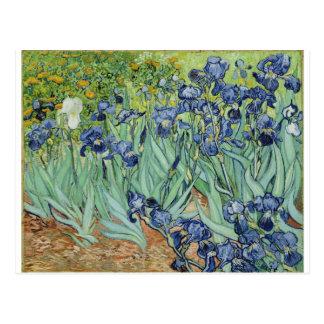 Carte Postale Iris de Van Gogh