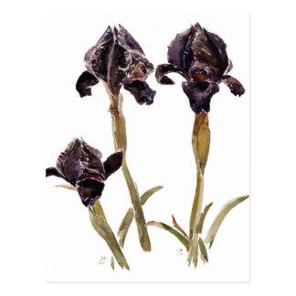 Carte Postale iris noir de la Jordanie