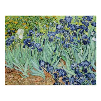 Carte Postale Iris par Vincent van Gogh