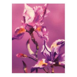 Carte Postale iris pourpre