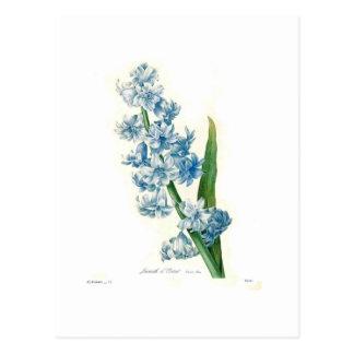 Carte Postale Jacinthe bleue