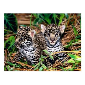 Carte Postale Jaguars de bébé