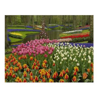 Carte Postale Jardin de tulipe et de jacinthe, jardins de
