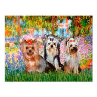 Carte Postale Jardin des terriers de Yorkshire (trois) -