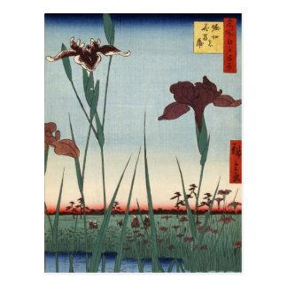 Carte Postale Jardin d'iris de Horikiri (堀切の花菖蒲)