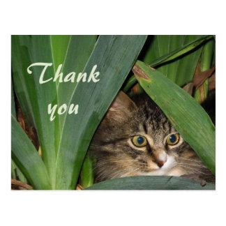 Carte Postale Jardin Kitty