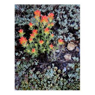 Carte Postale Jardin miniature au lac gem