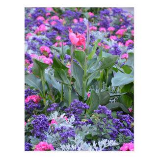 Carte Postale Jardin rose de zantedeschia au printemps
