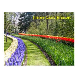 Carte Postale Jardins de Keukenhof, Pays-Bas