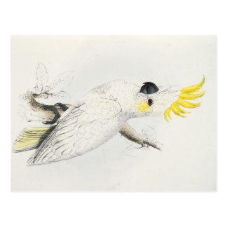 Carte Postale jaune de cacatoès