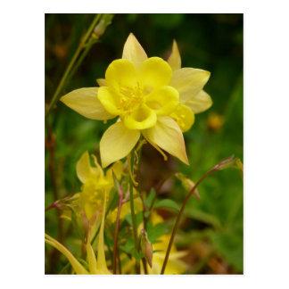 Carte postale jaune de fleur de Columbine