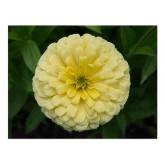 Carte postale jaune de fleur de Zinnia