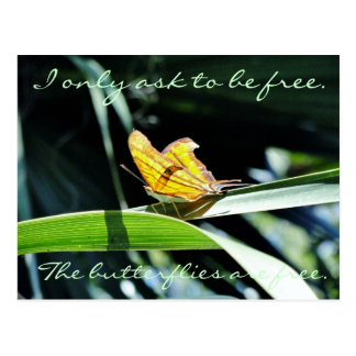 Carte postale jaune de papillon au soleil