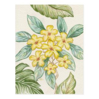 Carte postale jaune de Plumeria