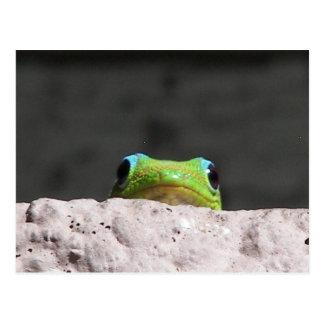 Carte Postale Je vous vois gecko