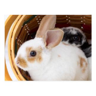 Carte Postale Jeunes lapins de Rex dans le panier de Pâques