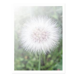 Carte Postale Jeunes plantes de Dandelioness