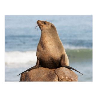 Carte Postale Joint de fourrure de cap se reposant sur une roche
