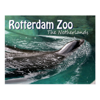 Carte Postale Joint de natation de Diergaarde Blijdorp de zoo de