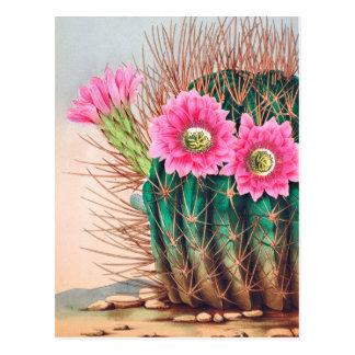 Carte Postale joli cactus