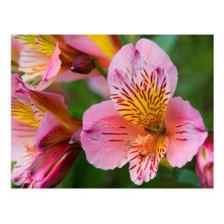 Carte Postale Jolies fleurs